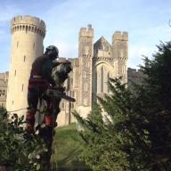 Tree felling at Arundel Castle