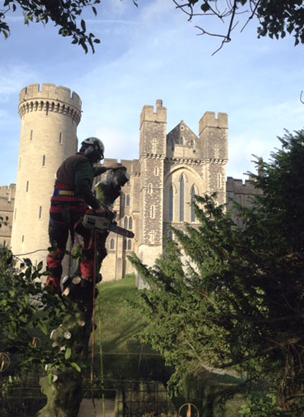 Tree felling at Arundel Castle