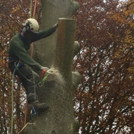 Tree felling in Catherington