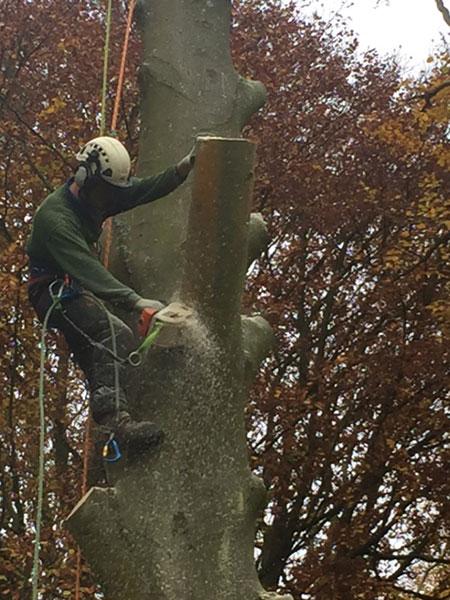Tree felling in Catherington