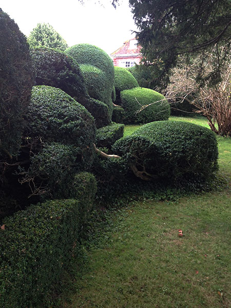Hedge maintenance in Cheriton