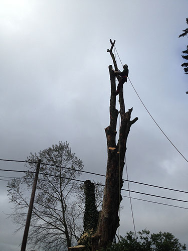 Tree felling Denmead