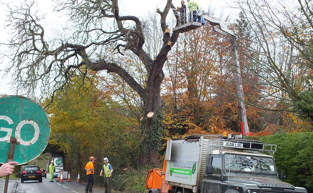 J Gordon Tree Felling Hampshire
