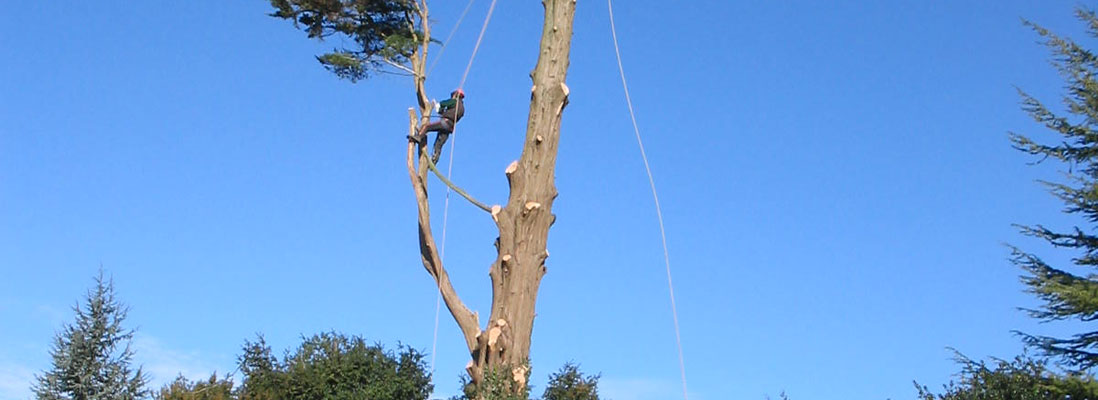 J Gordon Tree Surgeon