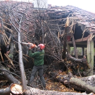 Emergency tree clearance in Hampshire
