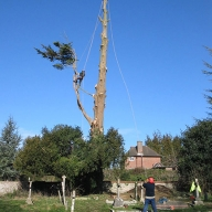Tree felling in a restricted area in a local churchyard