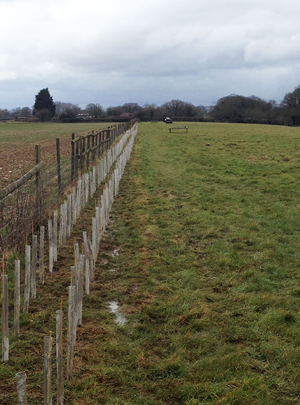 Planting in a paddock in Hambledon