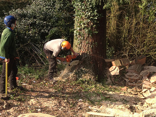 Site clearance on Hayling Island