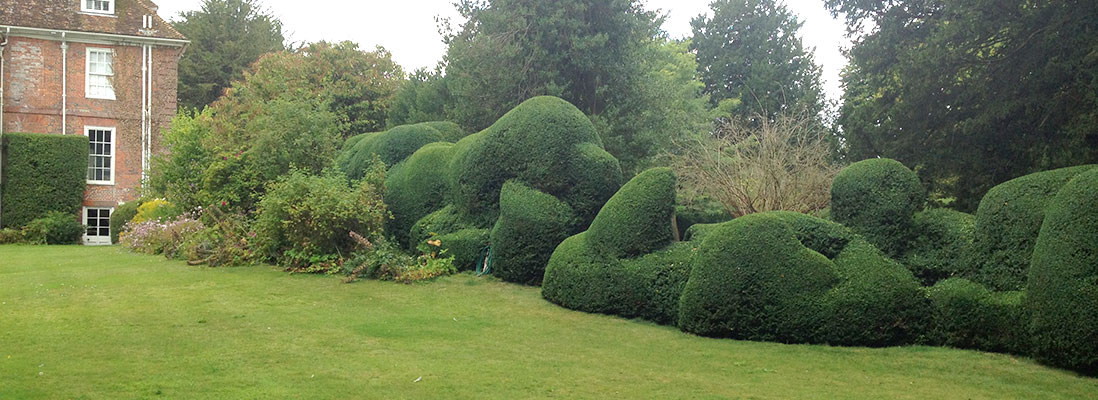 Hedge maintenance Hampshire