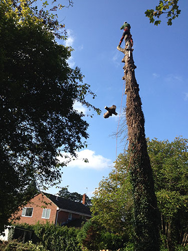 Tree felling Itchen Abbas