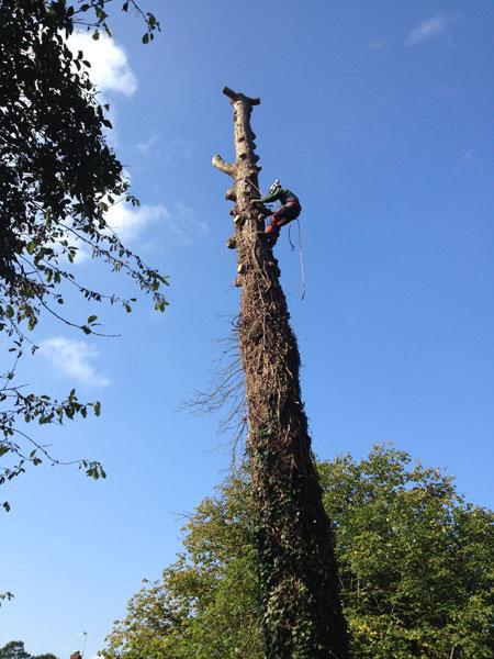 Tree felling in Itchen Abbas
