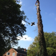 Tree felling in Itchen Abbas