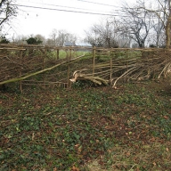 Natural fencing in Owlesbury