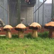 Hand carved wooden mushrooms, part of our Forestry Features range