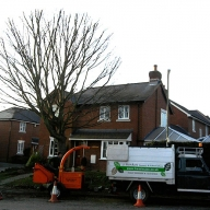 Crown reduction of a hornbeam in Wickham