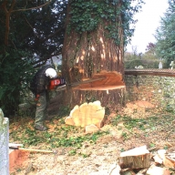 Tree felling a large tree in a restricted area, a local churchyard