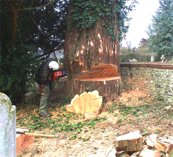 Tree felling a large tree in a restricted area (local churchyard)