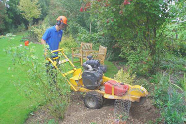 Stump grinding in Hambledon