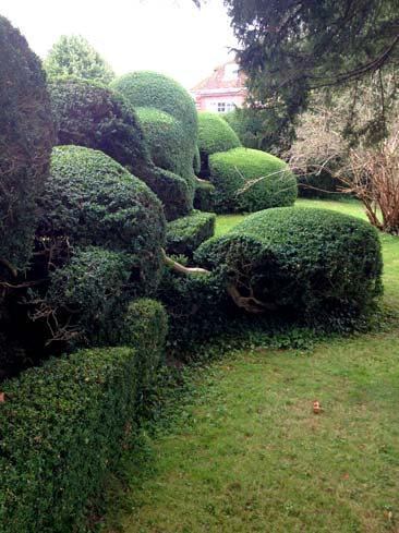 hedge maintenance garden feature