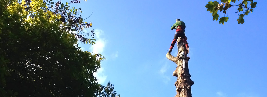 J Gordon Tree Surgeon Hampshire
