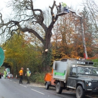 Tree felling on a public highway with traffic management
