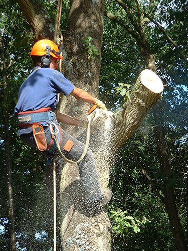 Tree surgeon tree felling Hampshire